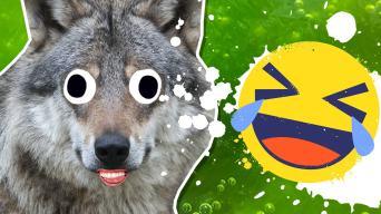 wolf jokes