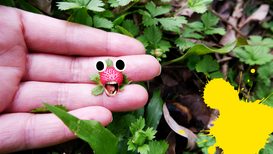 Hand holding berry with goofy face and yellow splat