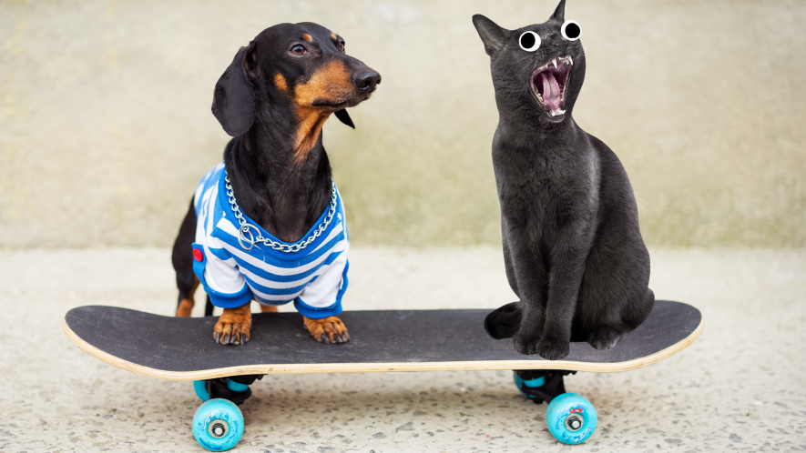 Dog on skateboard  with screaming cat