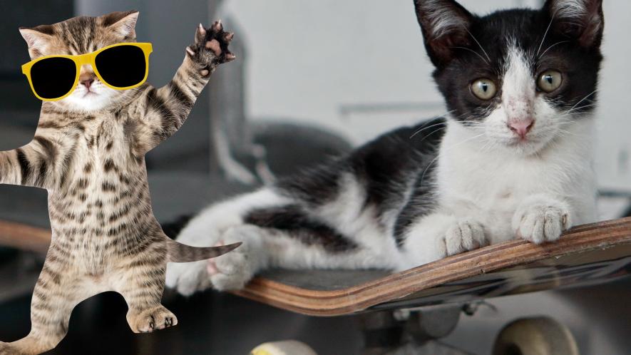 Cat on skateboard with dancing kitten