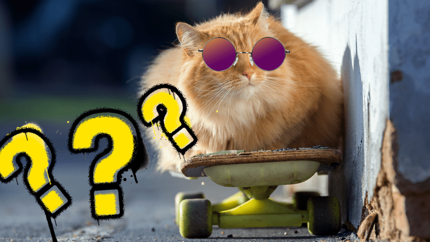 Cat on skateboard with sunglasses