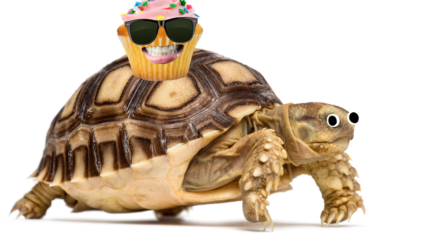 Tortoise with cupcake on it's shell