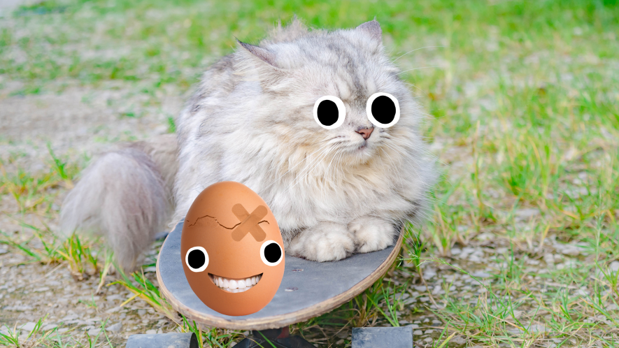 Cat on skateboard with egg