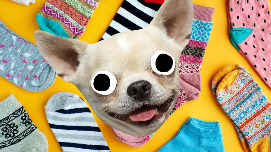 Happy dog face on sock background