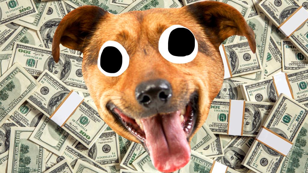 Derpy dog face on money background