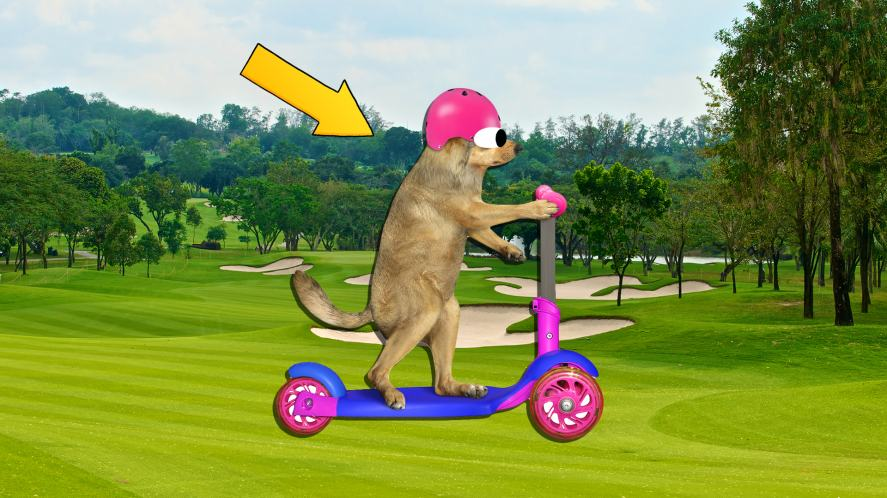 A dog rides a scooter across a golf course