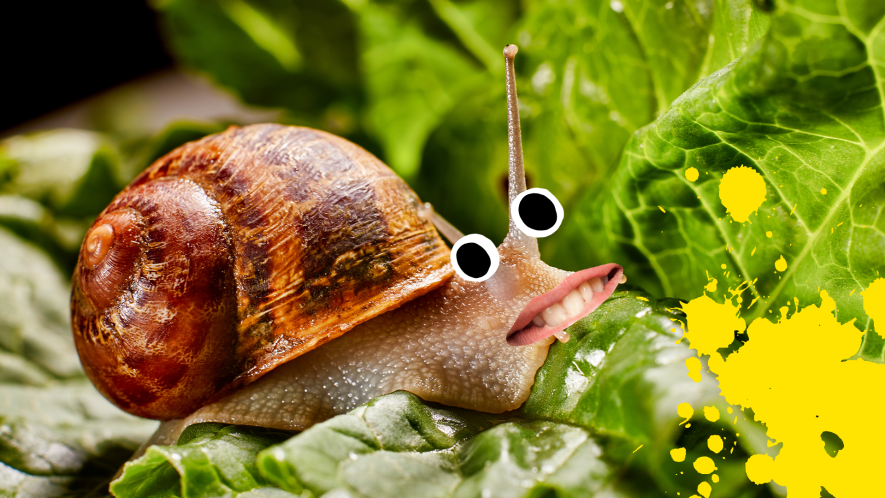 Snail with goofy face and yellow splat