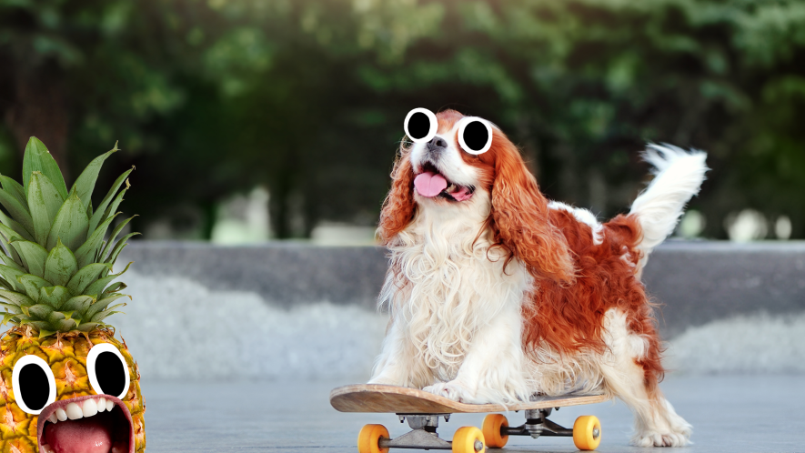 Dog on skateboard  with pineapple