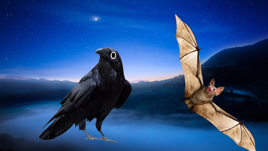 Raven and bat on night time background