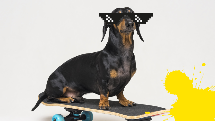 Dog on skateboard with sunglasses and splat