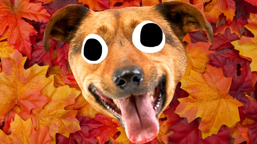 Goofy dog face on autumn leaf background