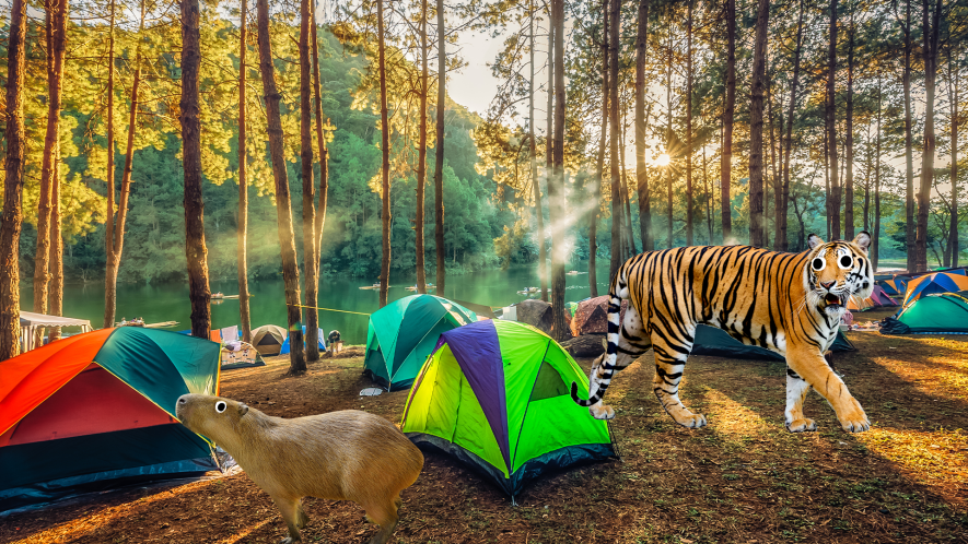Tents in forest with Beano tiger and capybara