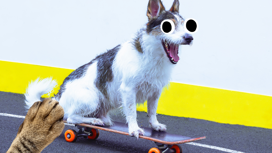 Dog on skateboard with paw in corner