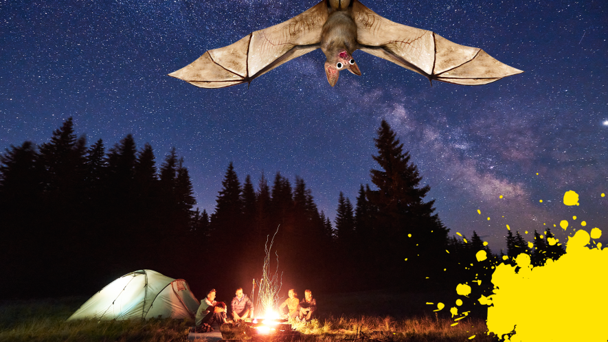 Camping at night time with splat and Beano bat