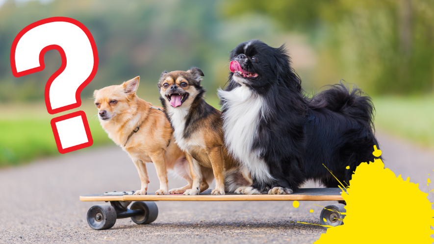 Three dogs on skateboard with question mark and splat
