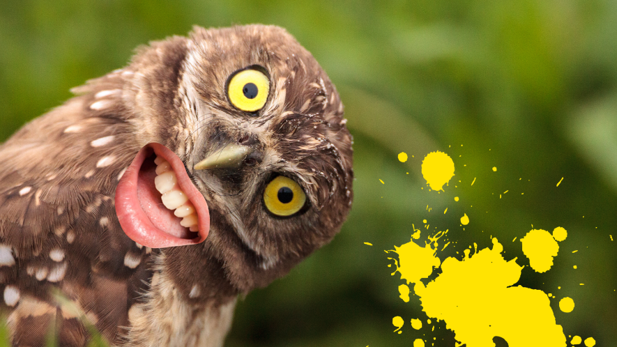 Owl with silly face and yellow splat