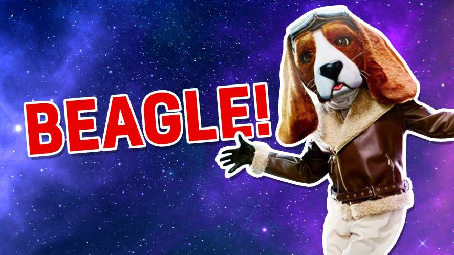 The Masked Dancer's Beagle