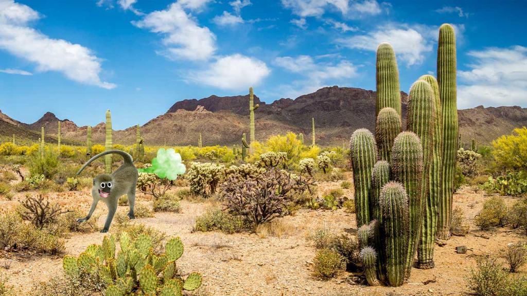 Cacti in a desert landscape