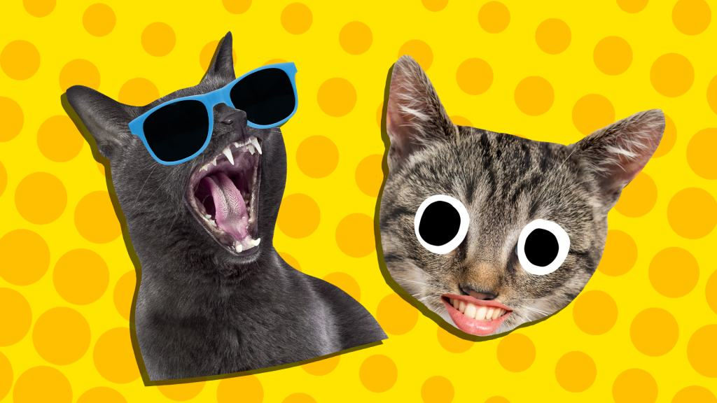 A laughing black cat and a grinning tabby cat