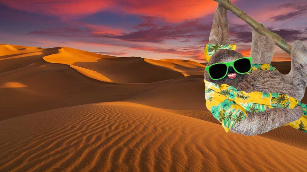 A sloth in a desert