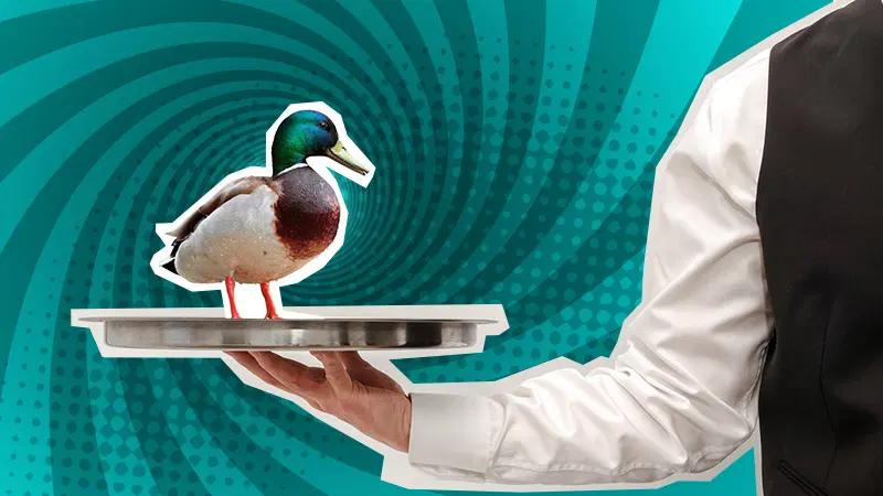 Mallard duck sitting on a silver plate held by a waiter