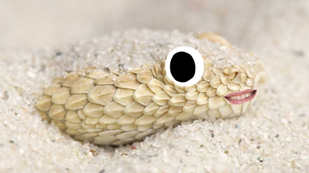 A snake hiding in the sand