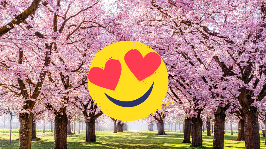 Trees with cherry blossom and heart eyes emoji