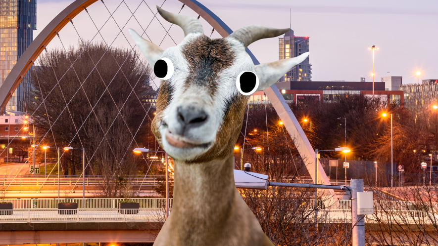 Derpy goat in front of city