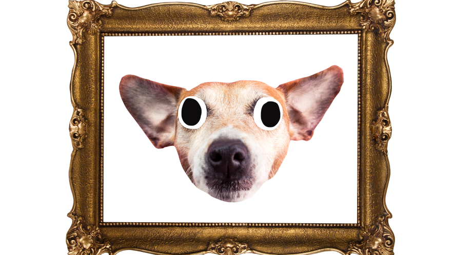 Derpy dog in painting frame on white background
