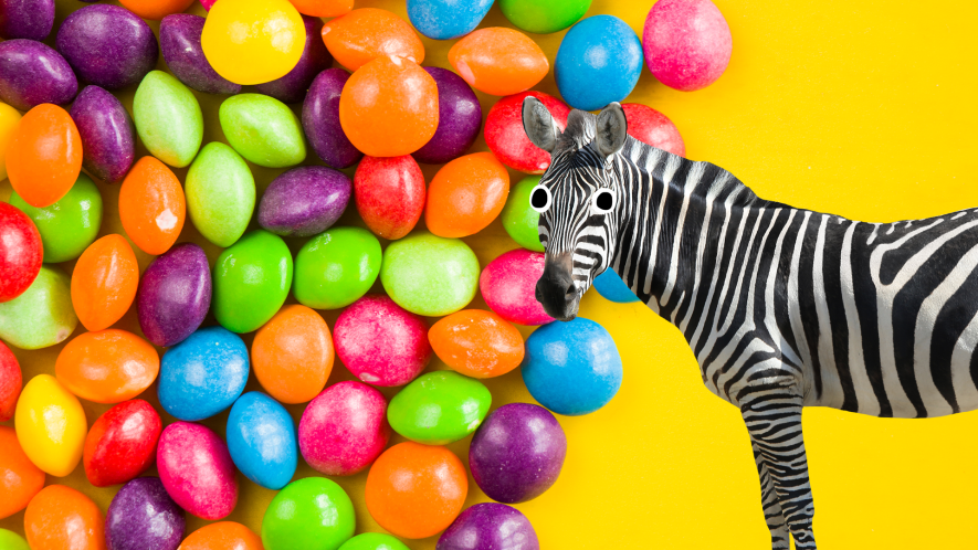 Skittles on yellow background with derpy zebra