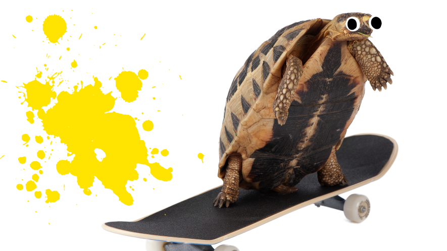 Tortoise on skateboard with yellow splat and white background