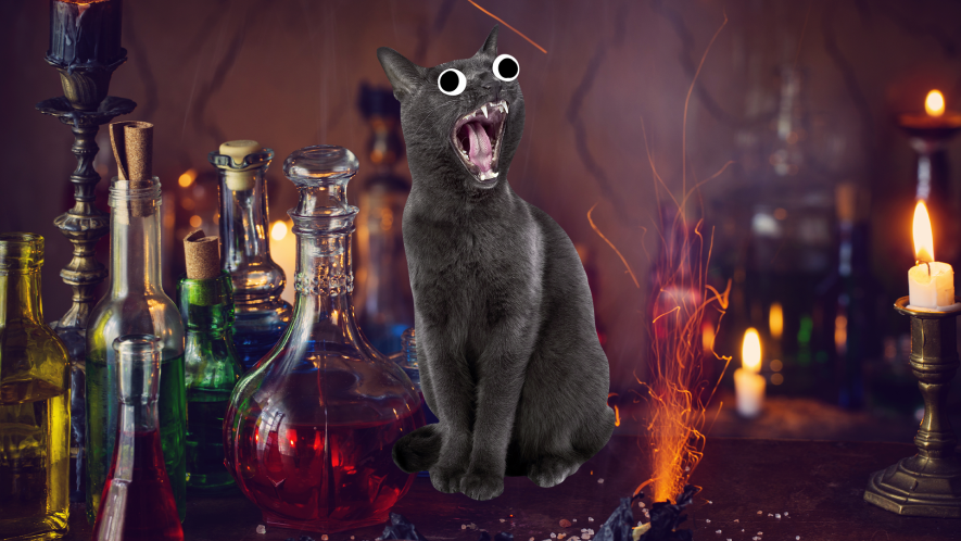 Screaming cat and magical potions