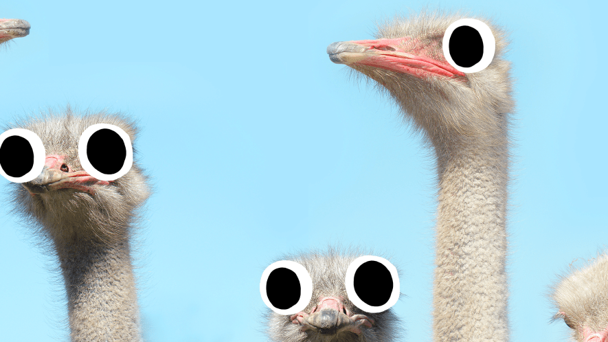 Goofy looking ostriches