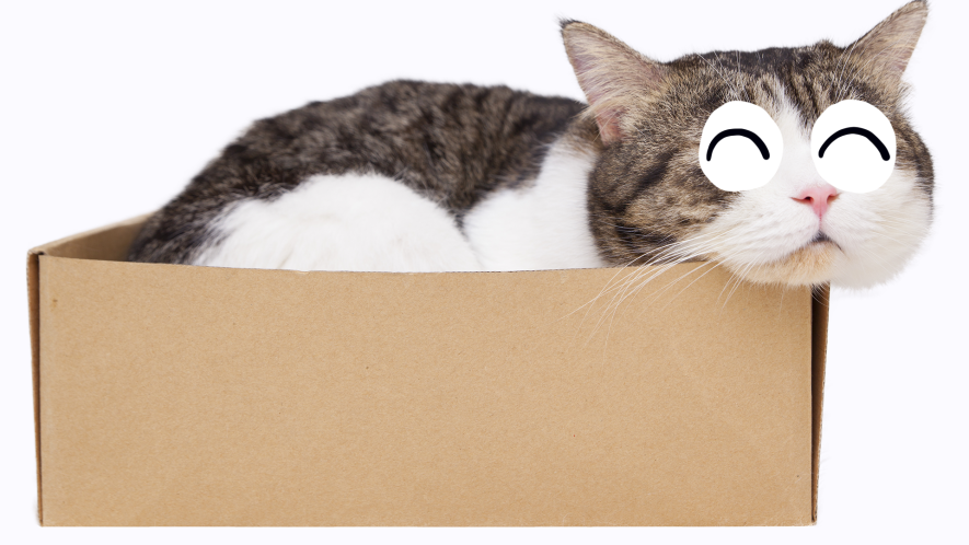 Cat sleeping in carboard box