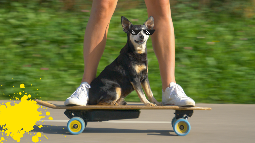 Man and dog on skateboard with sunglasses and yellow splat