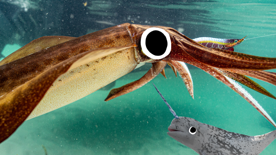 Giant quid underwater with Beano narwhal