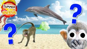 Summer of Adventure: Beach quiz