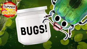 How to make a bug catcher