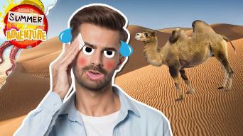 Summer of Adventure - Desert Facts