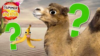 Summer of Adventure: Desert Quiz