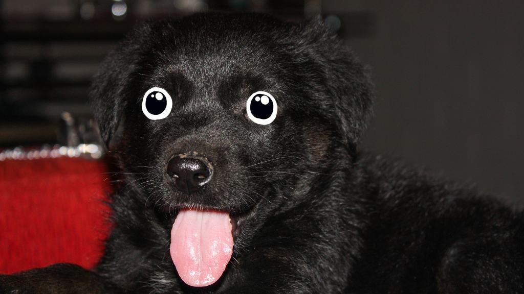 A cute dog a bit like Max's Digby