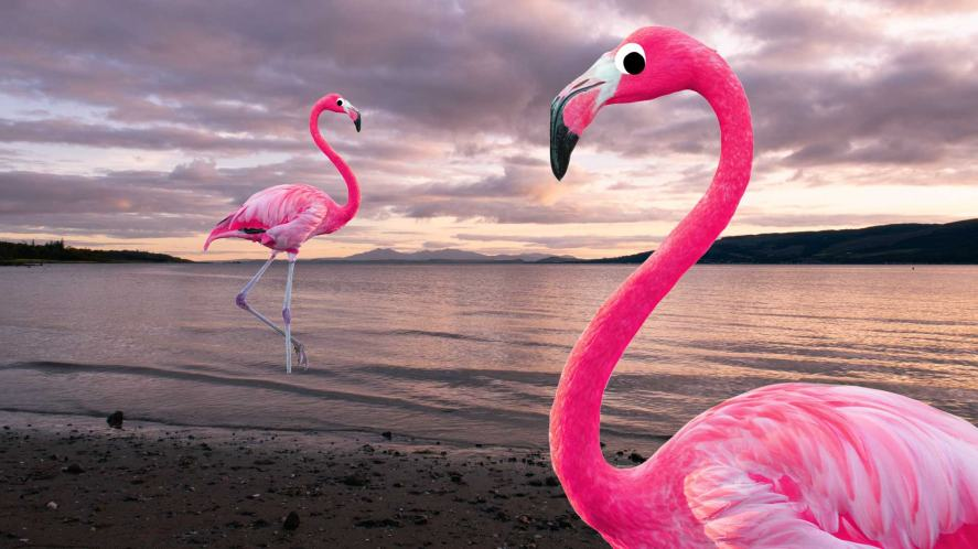 Two bright pink flamingos on a dull day