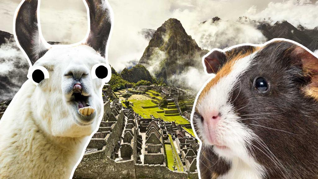 A llama and guinea pig in Machu Pichu