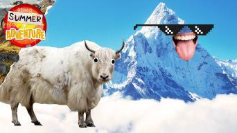 Summer of Adventure: Mountain Facts
