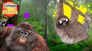 Summer of Adventure - Jungle Facts