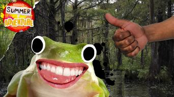 Summer of Adventure - Swamp Facts