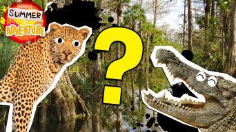 Summer of Adventure: Swamp Quiz