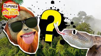 Summer of Adventure: Jungle quiz
