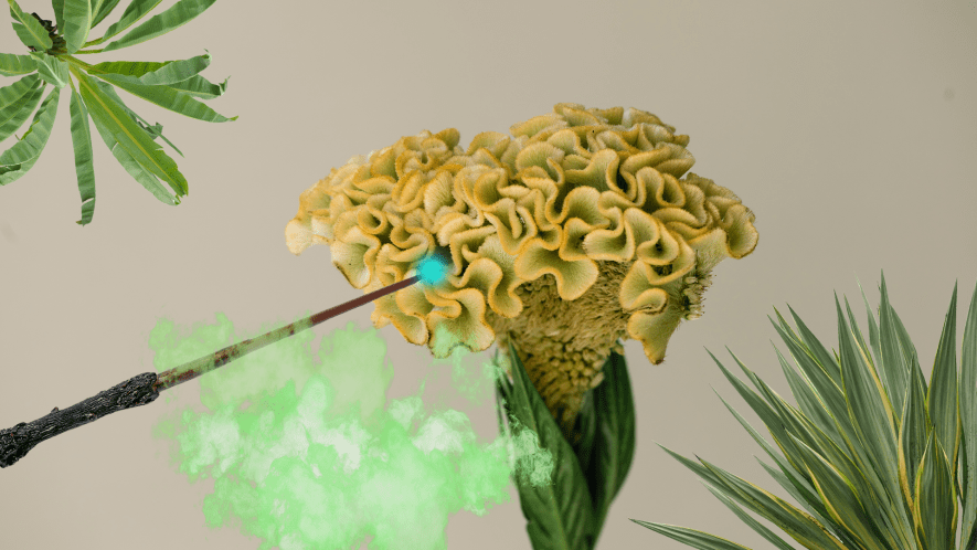 Weird plant with Beano gas and wand