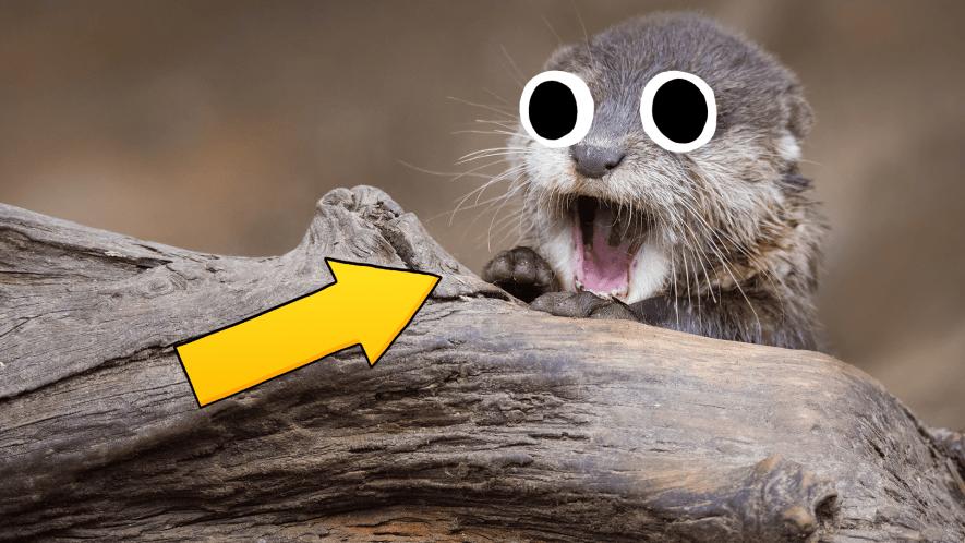Goofy otter and arrow
